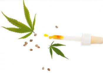 CBD marijuana oil in medicine dropper with marijuana leafs and seeds.